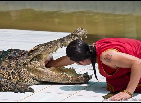 Krokodille show i Samut Prakan, Bangkok - Zoologisk have - Ferie i Thailand
